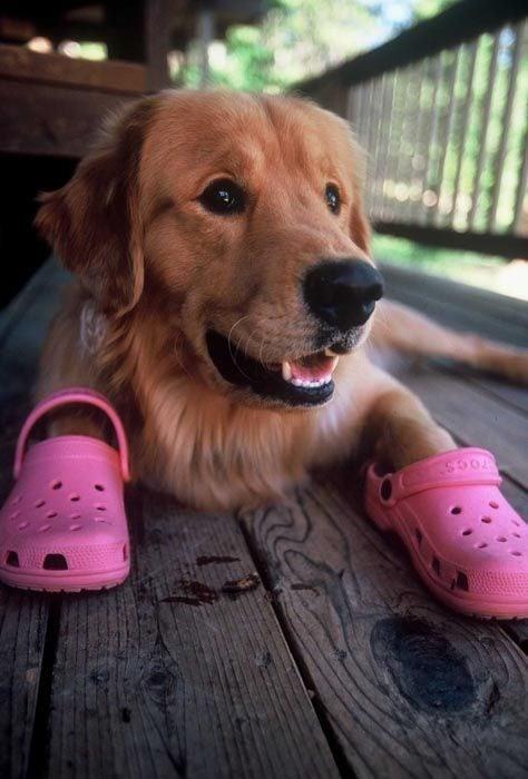 perro crocs