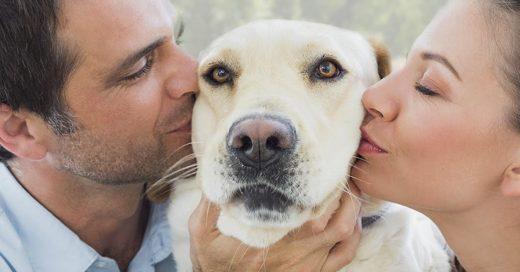 Cover Confesiones que todo amante canino se niega a aceptar