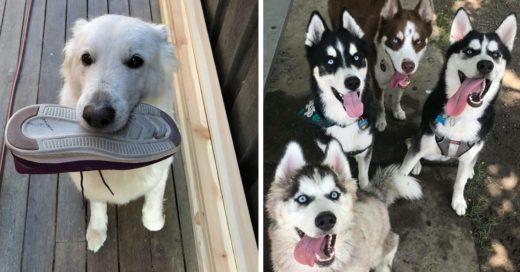Cover Perros que son la mejor terapia anti depresión