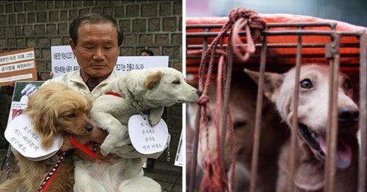Cover Un tribunal en Corea del Sur ha dictaminado que matar perros por carne es ilegal
