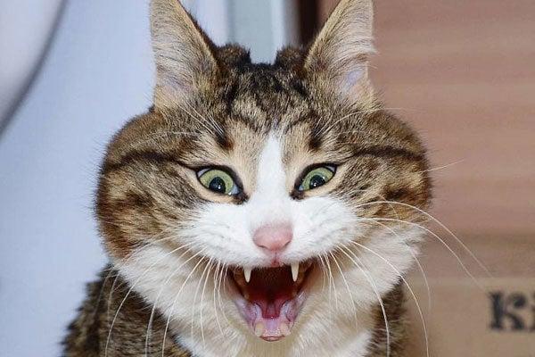 gato caras locas