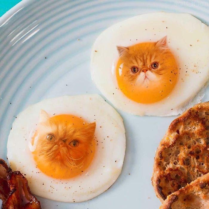 Gatitos en comida