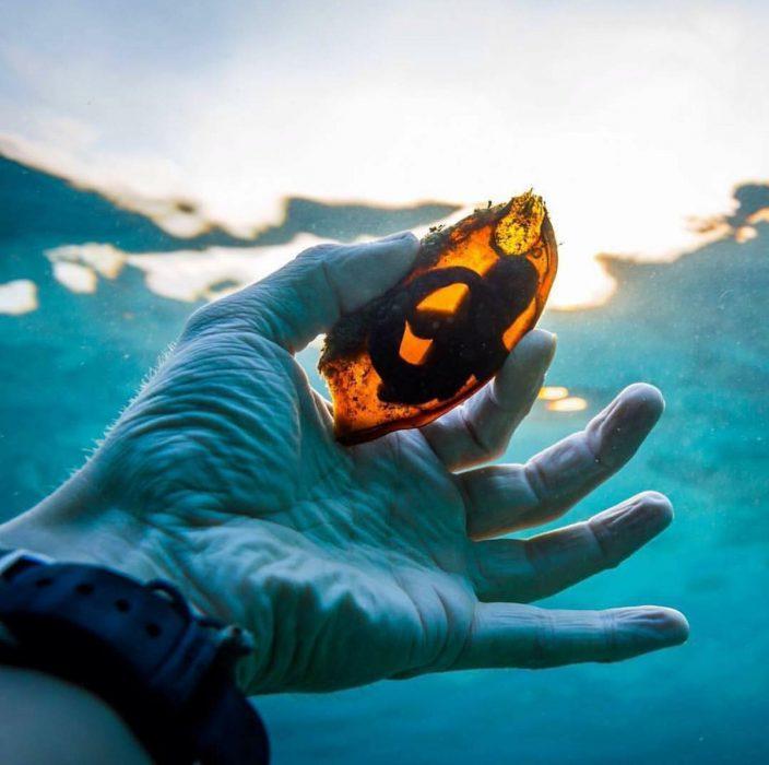foto de Huevo de tiburón a contra luz