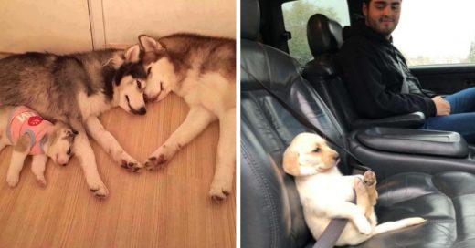 Cover Fotos de gatos y perros que te harán olvidar de todos los problemas