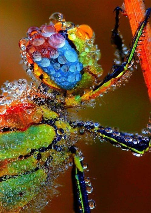Insecto retratado por un lente macroscópico