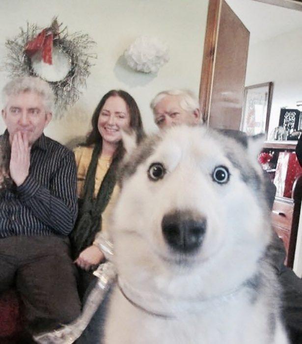 perrito entrometiéndose en la foto