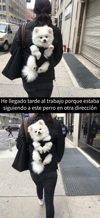 perrito en una mochila