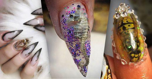 Cover uñas con insectos muertos