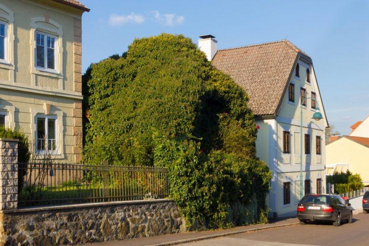 casa llena de hierba