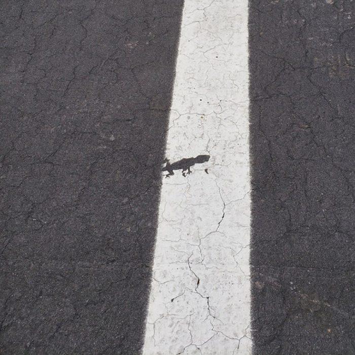 figura de lagartija que quedó cuando pintaron el suelo