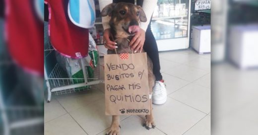 """Cover Perrito con cáncer vende """"busitos"""" para pagar el tratamiento"""