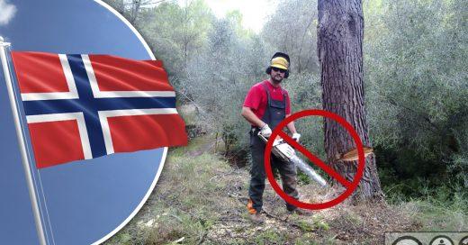 Cover En Noruega ya no se puede talar árboles