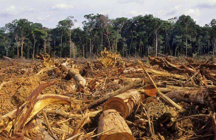 noruega prohíbe la deforestación