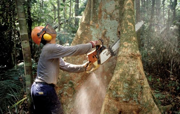noruega prohíbe deforestación