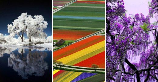 Cover Fotografías que demuestran que la naturaleza es asombrosa