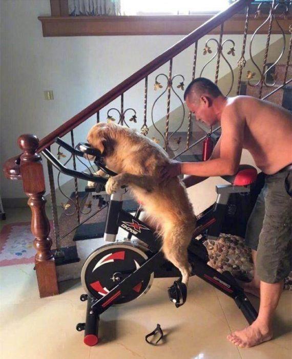 hombre enseñándole a andar en bici al perro
