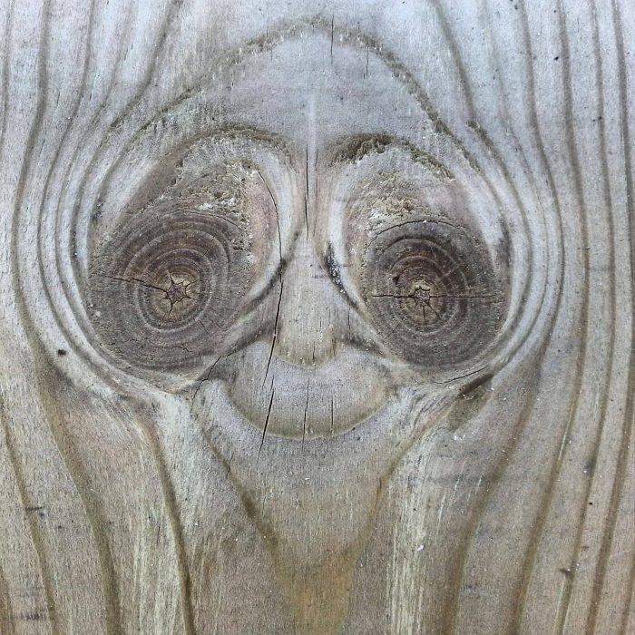 trozo de madera que parece un alienígena