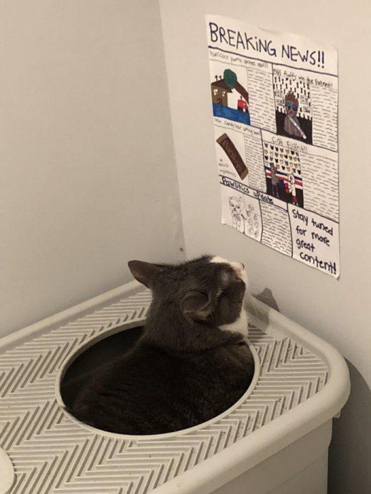 gatito leyendo periódico