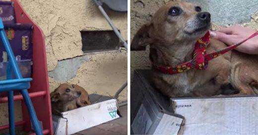 Cover Esta perra con tres patas dormía en una caja de zapatos en la calle hasta que por fin la rescataron