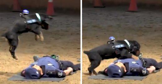 Cover Perrito salva de forma espectacular a un policía y demuestra su lealtad