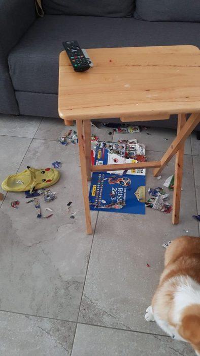 destrucción perro