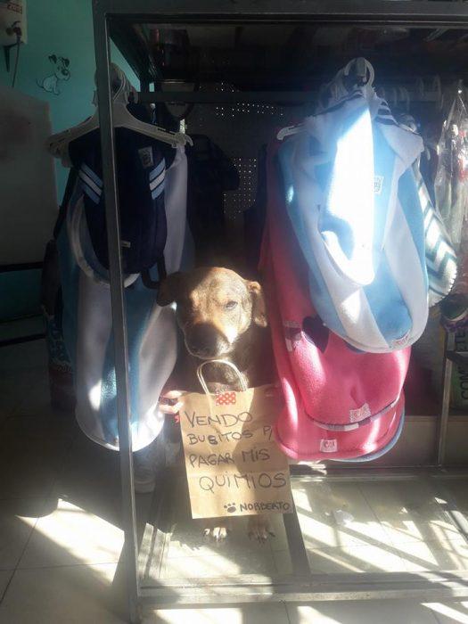 perrito mestizo con cartel