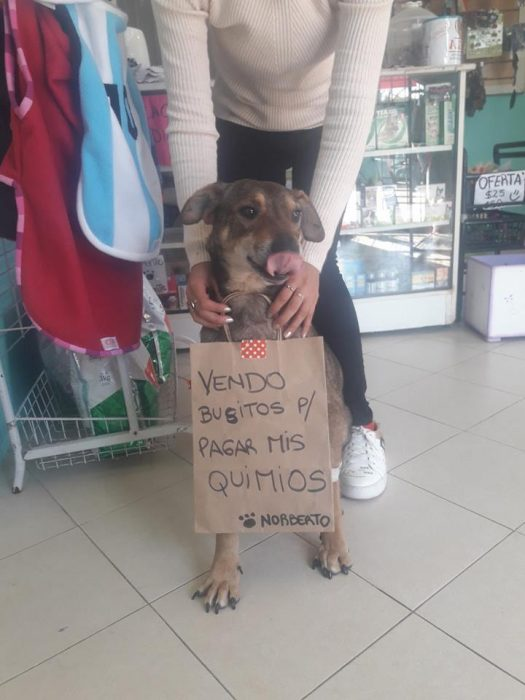 perrito con cartel que dice vendo busitos