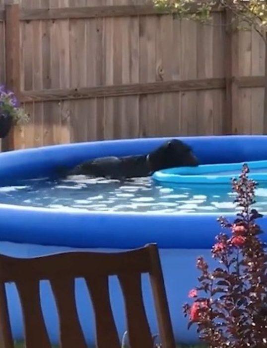 perrito nadando