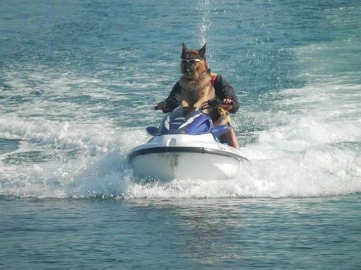 perrito en jet ski