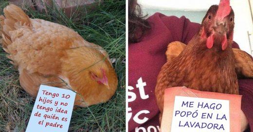 Cover pollos se han rebelado y han causado demasiadas travesuras