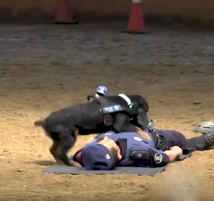 poncho perro policía