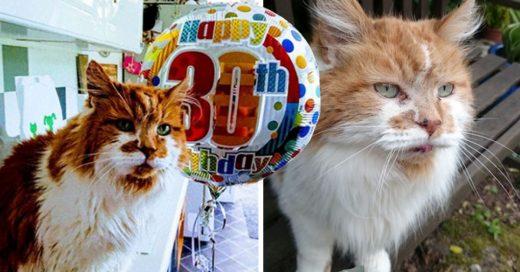 Cover gato cumplió 30 años