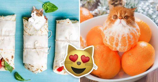 Cover Veces en que los gatos compitieron con tu comida favorita y ganaron