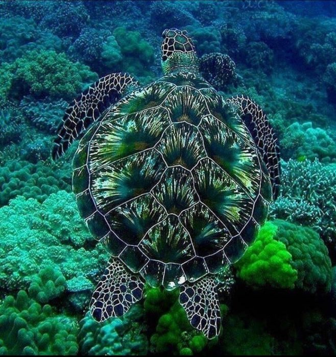 Tortuga marina verde