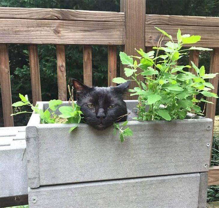 gato droga