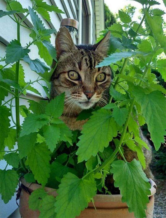 gatitos drogados