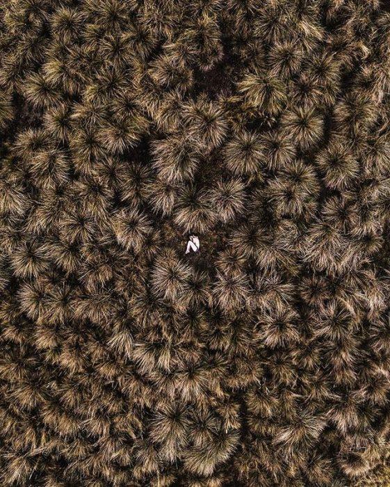foto aérea de una mujer entre maleza seca