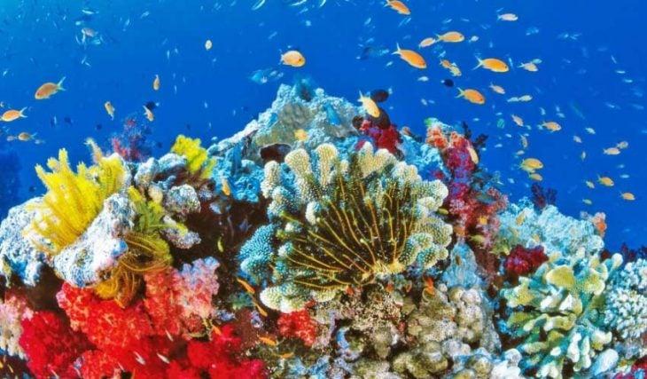 coral hermoso
