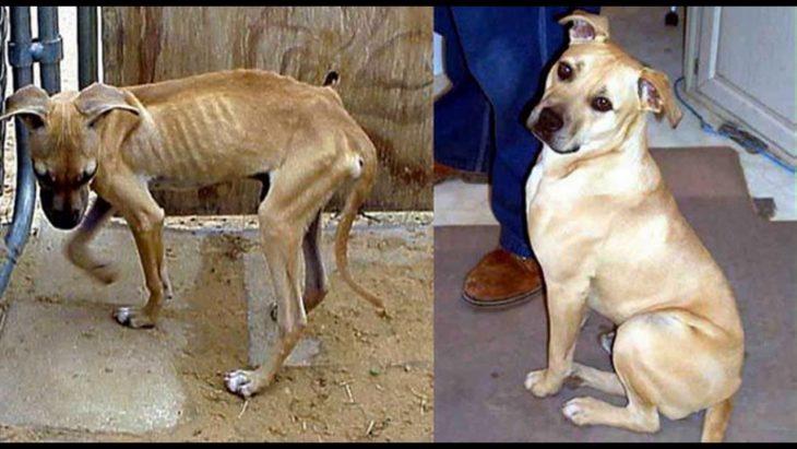 perrito antes desnutrido y después pachoncito