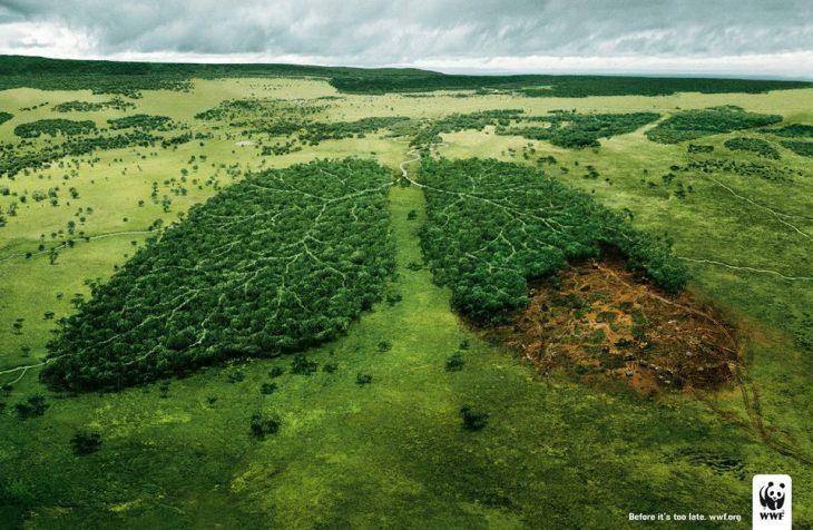Campaña contra la deforestación: los bosques son el pulmón del mundo