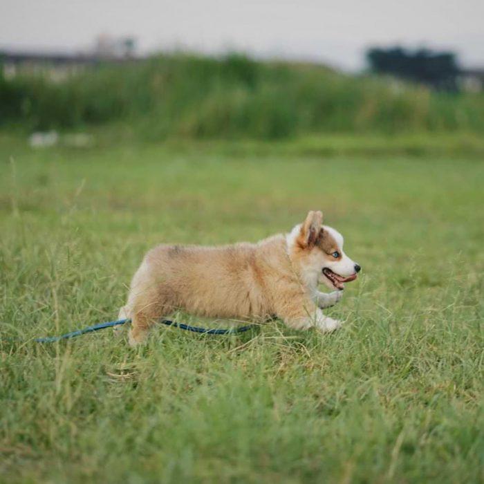 perrito corriendo por las praderas