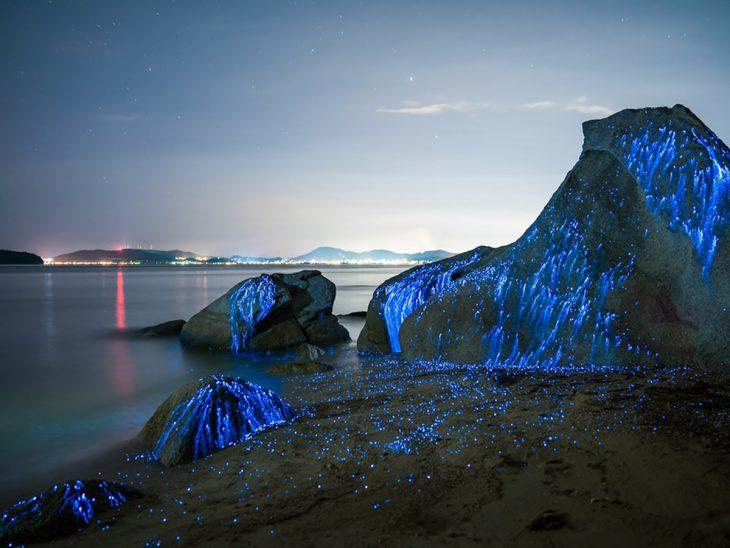 Camarones bioluminicente en una playa de Japón