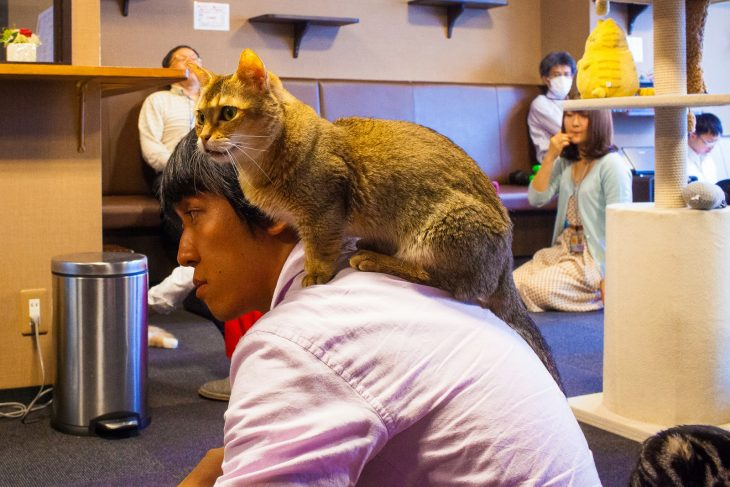 restaurante Calico Cat Café