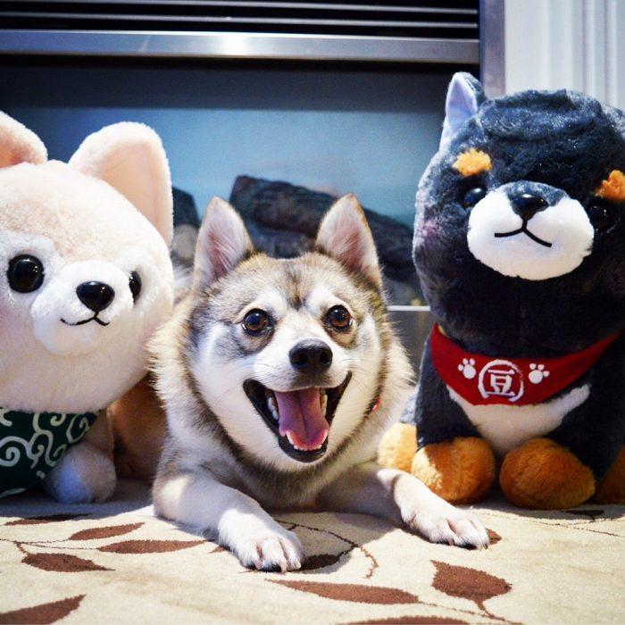 perrito real entre perros de peluche