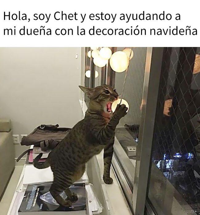 Gatos siendo avergonzados por sus crímenes