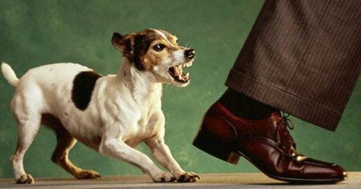 Cover La ciencia confirma que los perros pueden reconocer a una persona con malas intenciones