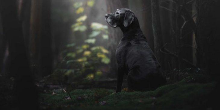 Fotógrafo de perros del año