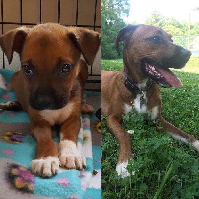 cachorrita vs la misma perrita pero adulta