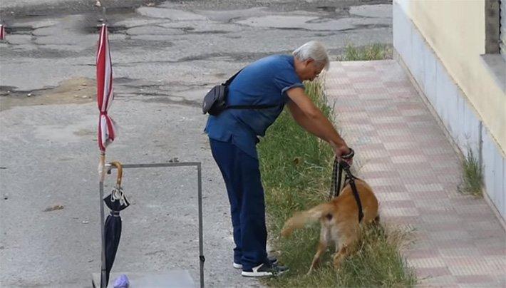 Hombre pasea a su perro discapacitado (3)