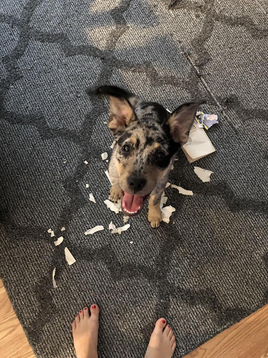 15 perritos que fueron atrapados cometiendo travesuras - Puedo banar a mi perro despues de la pipeta ...
